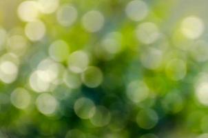bokeh flou fond vert photo
