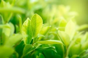 fond vert naturel avec jardin de lumière dorée avec espace de copie en utilisant comme arrière-plan photo