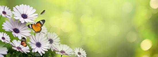 fleur feuille fond bokeh flou fond vert photo