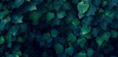 feuilles tropicales fleur colorée sur feuillage tropical sombre nature fond feuillage vert foncé nature photo