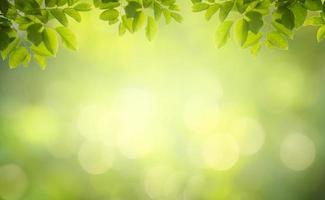 feuille arrière plan bokeh flou fond vert photo