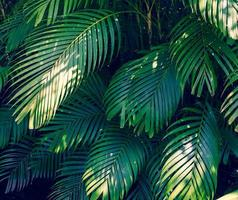 feuilles résumé palmier feuilles tropicales fleur colorée sur feuillage tropical sombre nature fond feuillage bleu foncé nature photo
