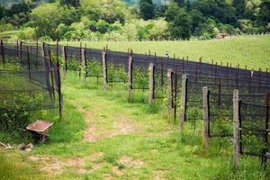 Panorama printanier des vignobles de la région viticole vallonnée de Novarese photo