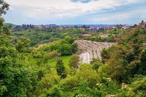 panorama des collines du monferrato, couvert de vignes et de noisetiers photo
