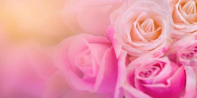 roses roses arrière plan flou saint valentin photo
