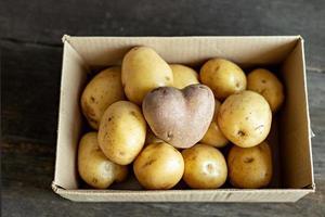 pomme de terre rouge en forme de coeur dans une boîte en carton parmi les pommes de terre blanches. photo