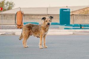 un chien errant abandonné se tient dans la rue. photo