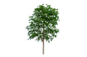arbres isolés sur fond blanc photo