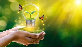 la forêt et les arbres sont dans la lumière. concepts de conservation de l'environnement et de réchauffement climatique plante poussant à l'intérieur d'une ampoule sur un sol sec dans le concept de sauvegarde de la terre photo