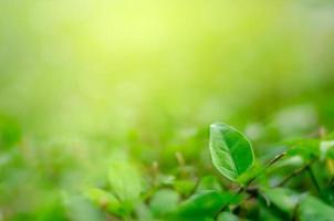 feuilles flou herbe verte fraîche DOF peu profond paysage de plantes vertes naturelles utilisant comme arrière-plan ou fond d'écran photo