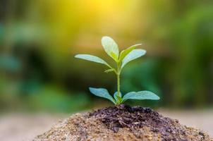 planter de jeunes plants dans la lumière du matin sur fond de nature photo