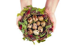 oeufs de pâques avec décoration. oeufs de caille dans un nid d'oiseau tenus par les mains de la femme. photo