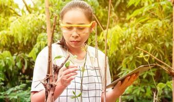 jeune agricultrice debout dans une ferme de haricots verts longs avec une tablette dans ses mains et examinant la récolte. photo