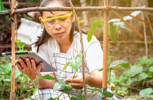 jeune agricultrice assise dans une ferme de haricots verts longs avec une tablette dans les mains et examinant la récolte. photo