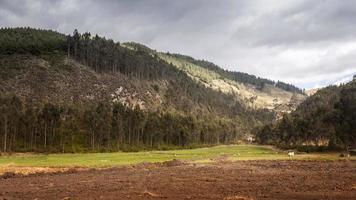 paysage avec montagne et arbres photo