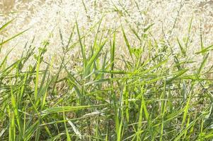 herbe verte sous la forte lumière du soleil photo