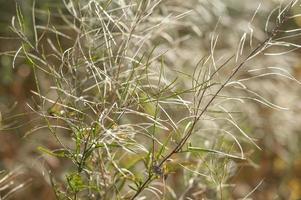 beau fond d'herbe sèche apaisante avec motif naturel sans couture photo