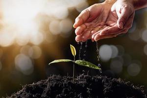 la main de l'agriculteur arrose les semis sur fond flou photo