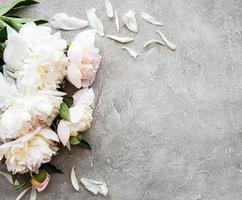 fond avec des pivoines roses photo