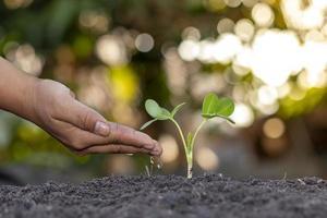 plantation à la main de l'agriculteur, arrosage des jeunes plantes sur fond vert, concept d'ensemencement et de croissance de plantes naturelles. photo