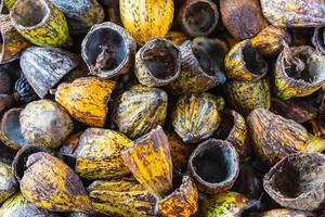coque de fruit de cacao et coque de cacao sèche photo