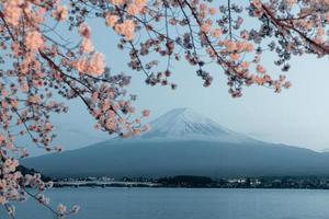 beau cerisier avec des fleurs photo