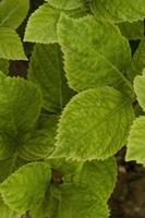 Arrangement de nature morte fleurs avec plante verte photo