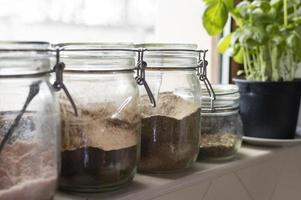 arrangement avec des pots et des plantes photo