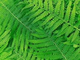 motif nature fait de feuilles de fougère vertes. photo