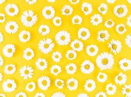 motif de fleurs de camomille sur fond jaune. photo