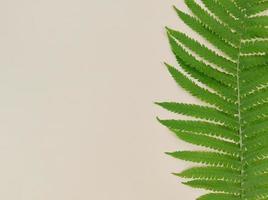 feuille de fougère verte sur fond beige avec espace de copie. photo