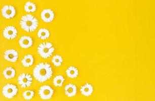 fleurs de camomille sur fond jaune avec espace de copie. photo