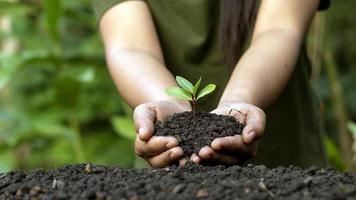 concept de la journée mondiale de l'environnement avec une fille tenant de petits arbres à deux mains pour planter dans le sol. photo
