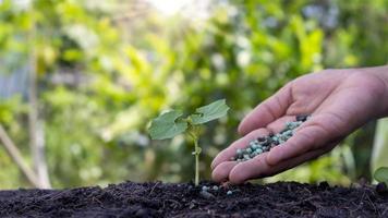 les mains fertilisent les semis et arrosent les semis poussant sur un sol fertile. concept d'agriculture, protéger la nature photo