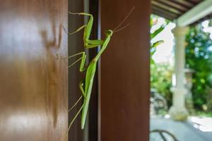 Feuille de marche sur une porte à Bali photo