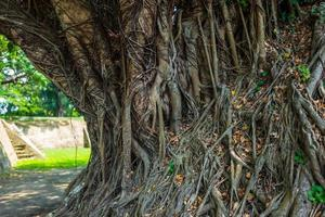 grand arbre avec des racines à tainan à taiwan photo
