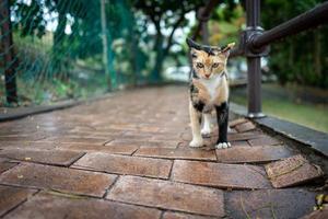 un chat des rues à malacca en malaisie photo