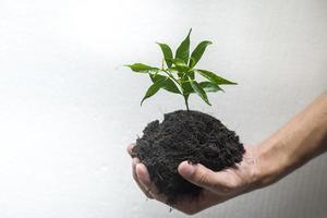 main humaine plantant un arbre sur fond blanc, sauvez le concept de la terre photo