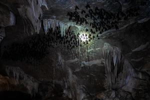 une batcave au parc géoforestier de kilim karst à langkawi en malaisie photo