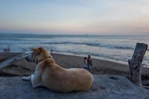 un chien à echo beach à canggu à bali photo