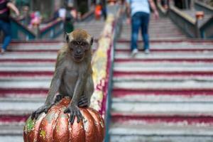 un singe près des grottes de batu à kuala lumpur photo