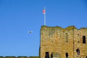 Mouette volant au-dessus du prieuré et du château médiévaux de Tynemouth, Royaume-Uni photo