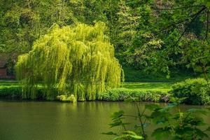 végétation luxuriante et usure de la rivière à durham, royaume-uni photo