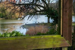 vue à travers un grand cadre photo creux d'arbres et d'oiseaux dans l'étang