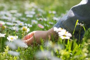 main d'une petite fille, sur le terrain, cueillant une fleur de marguerite photo
