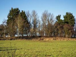 bosquet d'arbres dans la réserve naturelle de staveley north yorkshire angleterre photo