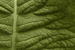 grande texture de feuille verte photo
