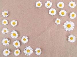 fleurs de camomille sur papier kraft brun avec espace de copie. photo
