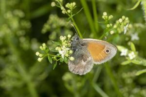 Plans macro latéraux d'un petit papillon sur une fleur blanche sur un arrière-plan flou photo