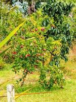 belles fleurs de jardin colorées. ranui, auckland, nouvelle-zélande photo